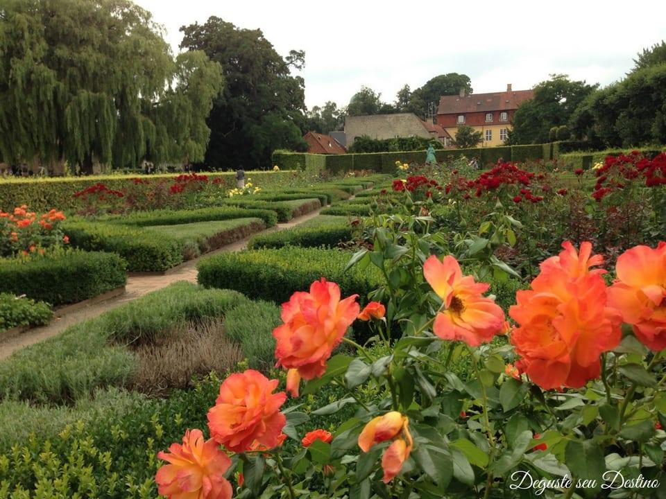 O lindo roseiral do parque Kongens Have.